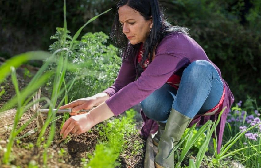 How to stop weeds from growing in vegetable garden