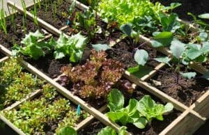 how to take care of vegetable garden on vacation