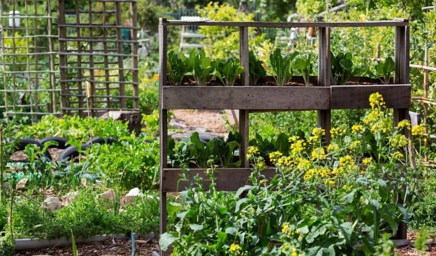 build a vertical vegetable garden