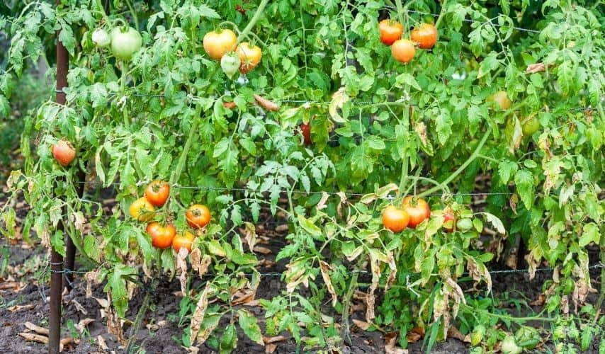 how to protect vegetable garden from heavy rains