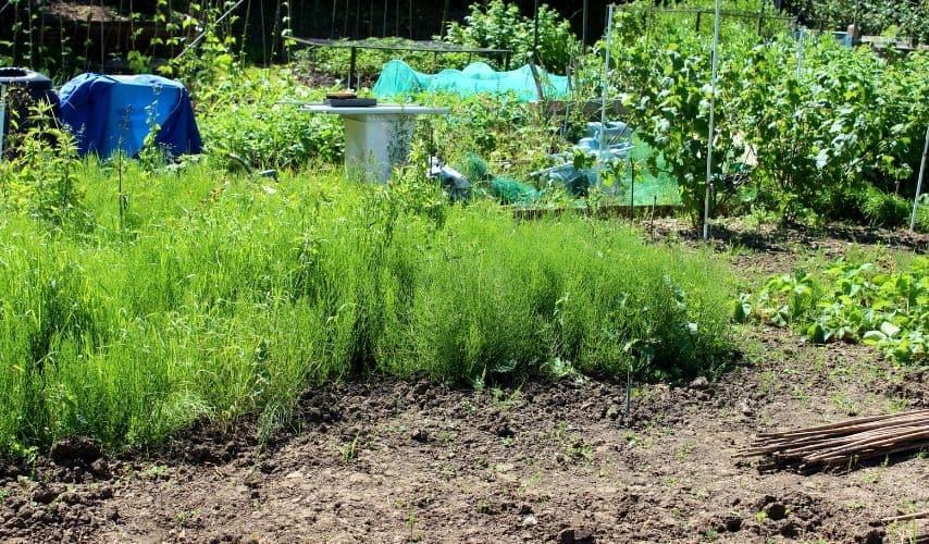 how to restart a neglected vegetable garden