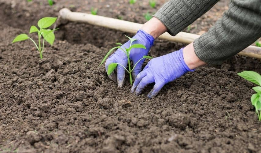 how to restart a neglected vegetable garden