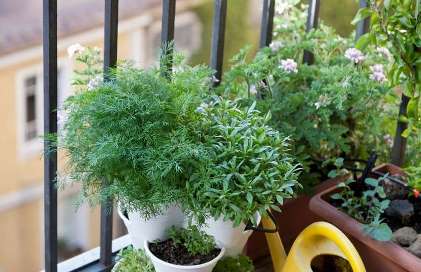what is a balcony garden