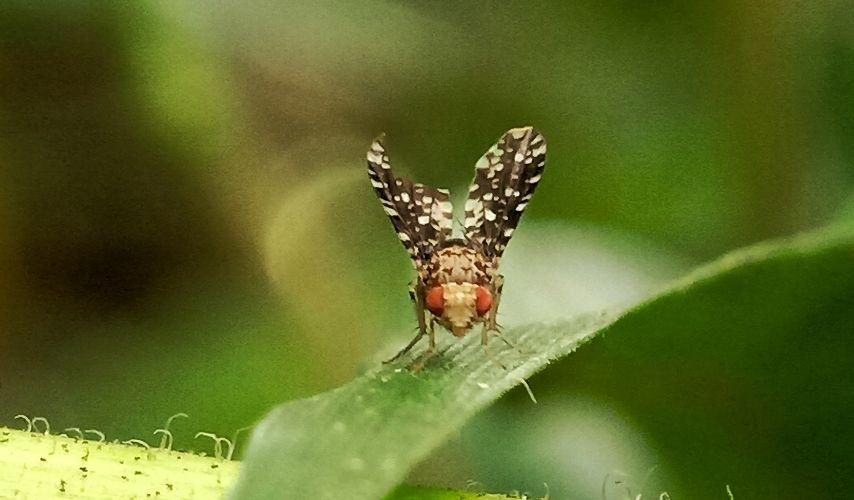 get rid of fruit flies in the garden