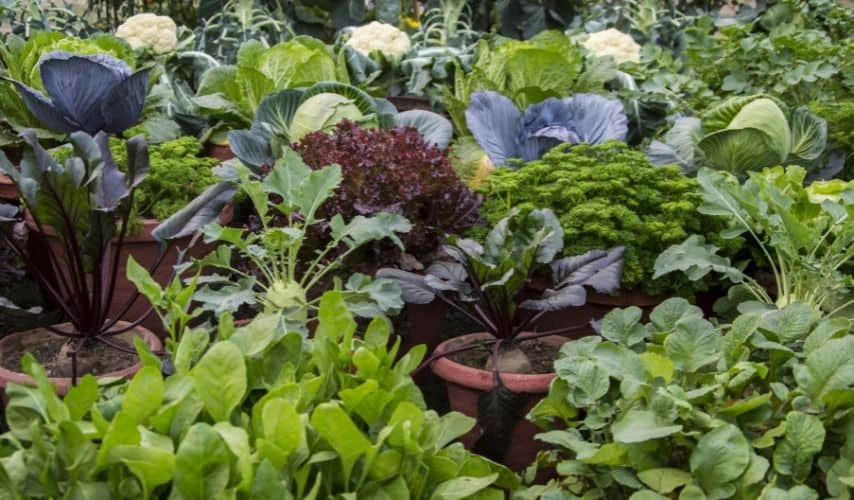 vegetable garden what not to plant next to each other