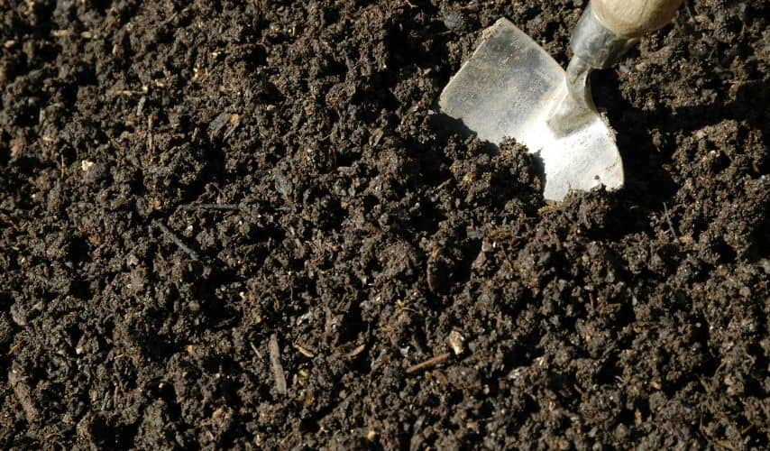 How To Use Mushroom Compost In Vegetable Garden