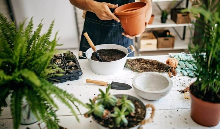 List of plants that grow in small pots