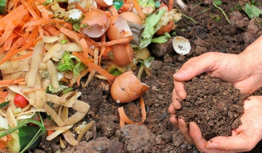 Make Mushroom Compost At Home