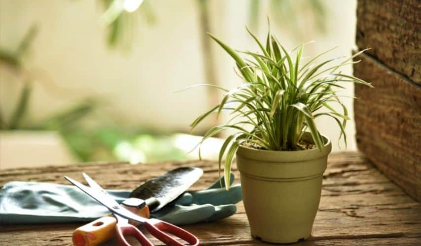 Plants That Grow in Small Pots
