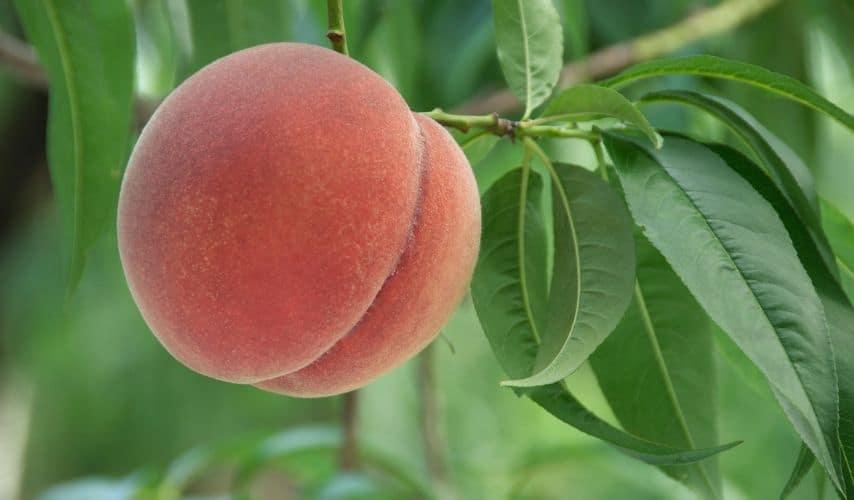 easy fruit to grow inside