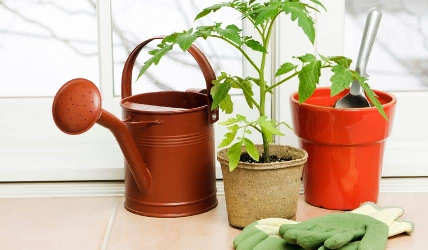 easy fruits and vegetables to grow in pots