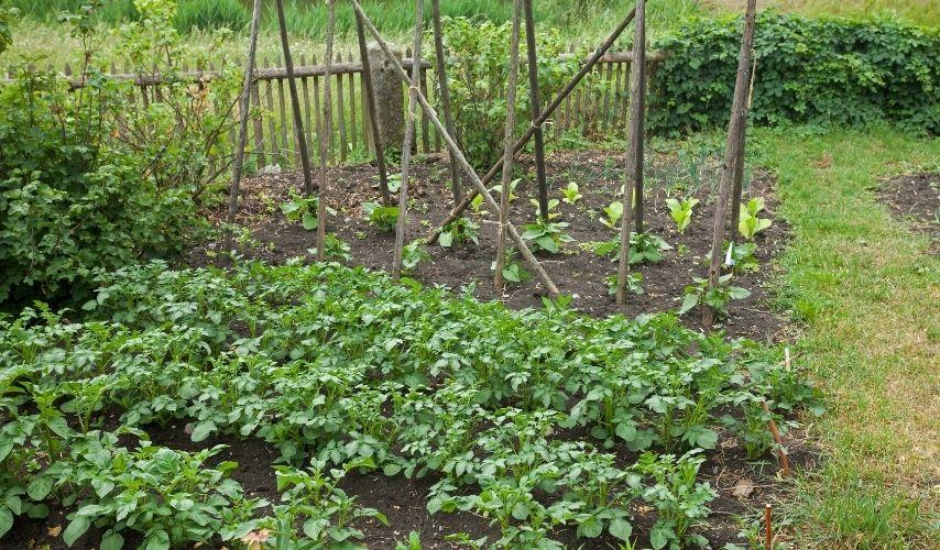 fruit and vegetable garden