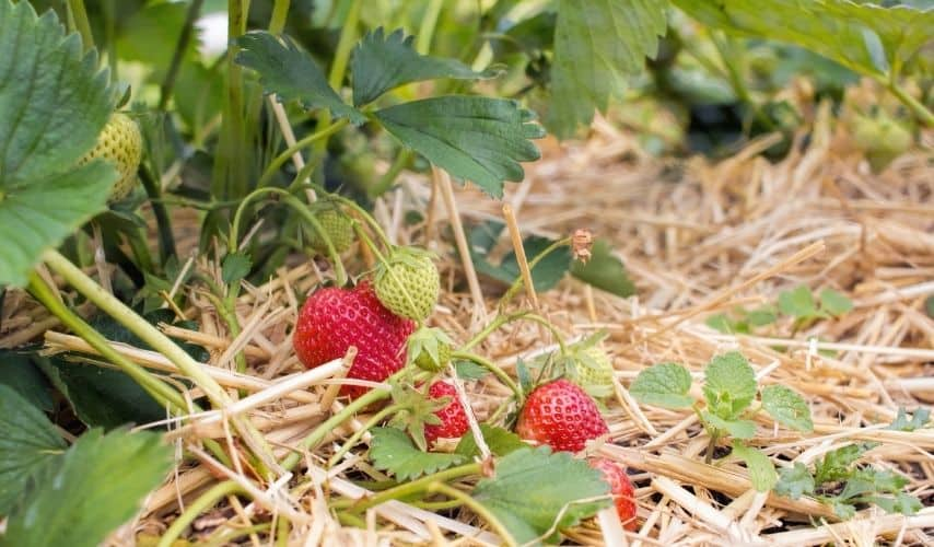 how to plant a fruit and vegetable garden