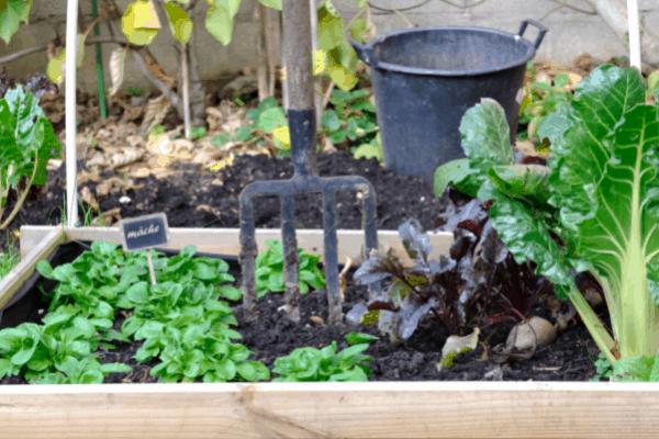 Square Foot Garden Companion plants