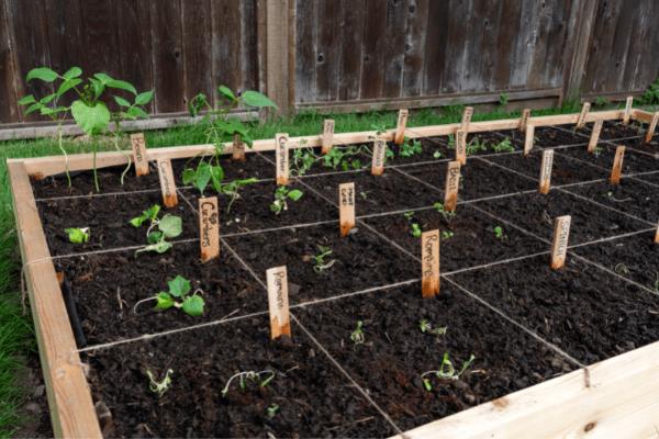 Square Foot Gardening Broccoli tips